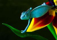 Reptilien - Chamäleon - Chamaeleonidae
